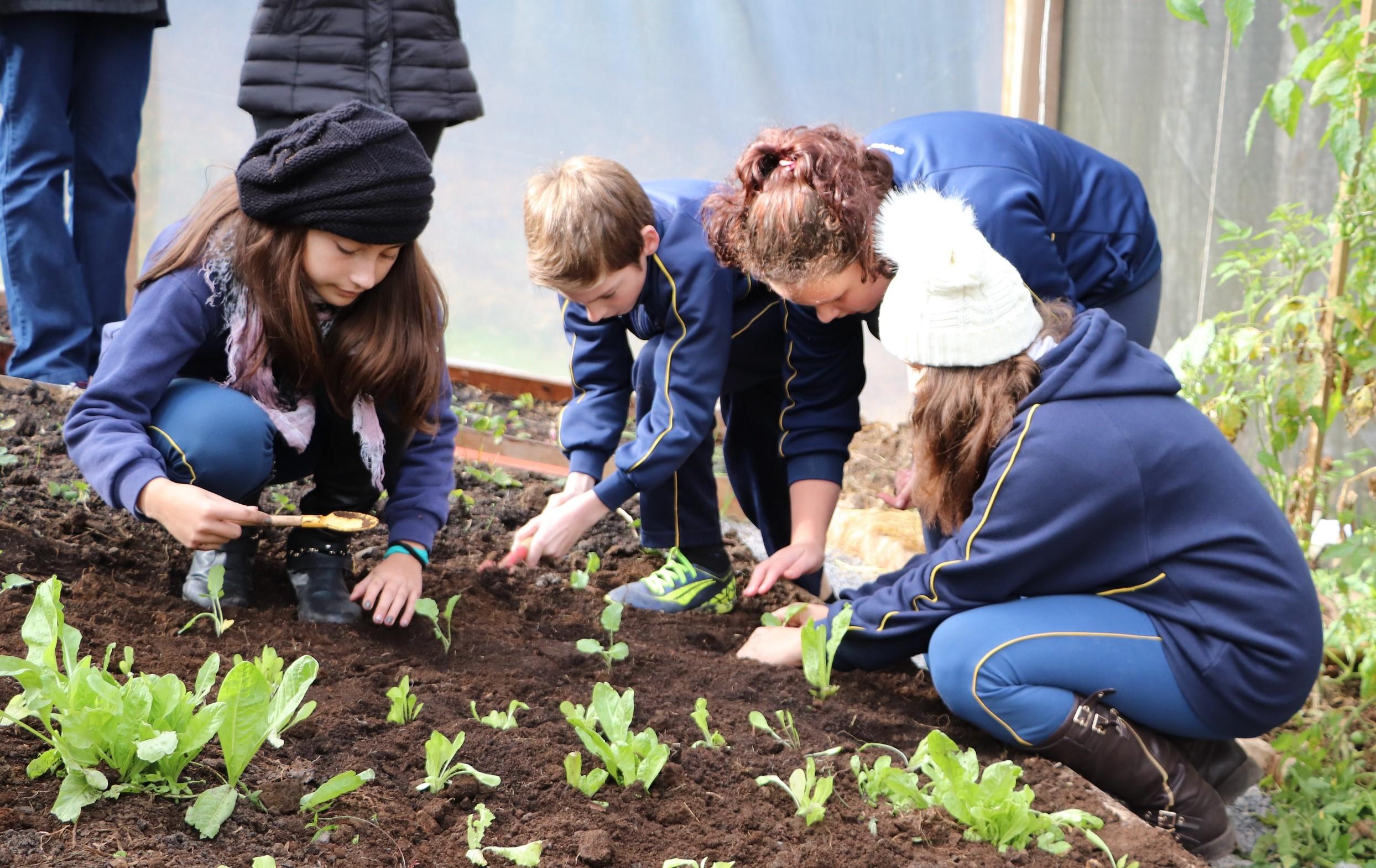 Plantando o Bem foca em aproveitamento dos alimentos